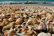 Florida Travel Ideas