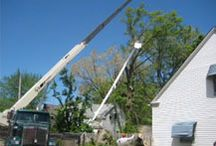 Tree Services / Leave it to the professionals at Precision Tree Service to provide expert care for the trees on your property. Our comprehensive services include:  Tree and stump removal Lot Clearing Shrub removal Tree trimming and topping Removal of dead limbs