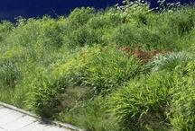 Foliage / Trees, Shrubs, Grass etc.