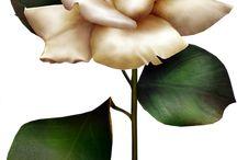 одиночные цветы