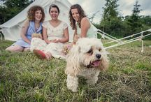 Pets at Weddings / Bring along your pets to your wedding day. These couples did.