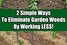 Stopping Weeds In The Garden and Landscape / Pins and Articles Dedicated To Keeping your garden, flowerbeds and landscape free of weeds - naturally!