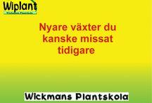 Nyheter 2010-2014 / Några av de nyare  växterna under de senaste åren. Mera hittar du på http://www.wiplant.fi/nyheter2010_2014.pdf