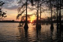 Born on the Bayou / by Vickie Ashley