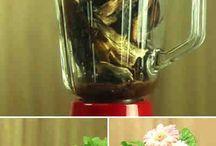Remedio para plantas muertas