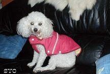 patron vêtements chien
