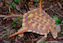 Черепахи, лягушки жабы