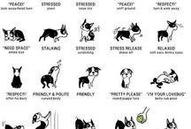 Doggy stuff
