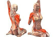 yoga poses anatomy