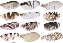 ali insetti