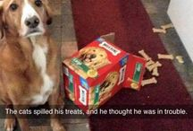 Dogs / Pins, pictures and posts about dogs, funny dog memes, funny dog pictures.