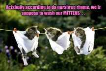 Cats! / by Allison Bertels