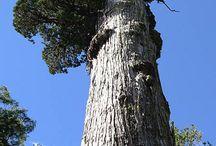 Tree Sadar