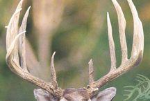 So en-deering!