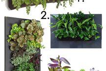 asma bahçe