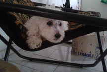 Lila do Cabuletê / Minha cadela é uma figura...