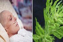 Herbal Medical