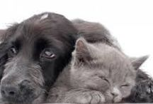 Northwest Territories, Canada Animal Shelters/Rescues / Websites of animal rescues/shelters in Northwest Territories, Canada http://www.bestcatanddognutrition.com/roger-biduk/canadian-animal-rescues-shelters/