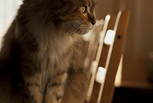 """Cats and Dogs / """"Dogs believe they are human. Cats believe they are God."""" / by Hilary Merola"""