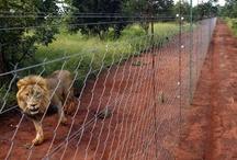 Fences News
