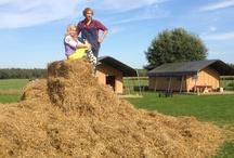 Hooi Hooi met Boer en Bloem / FarmCamps heeft haar eigen boerenavontuurlijke TV spel programma! Te zien op RTL Telekids. Ook te bewonderen op de Telekids App zo vaak als je wilt! Voor 2013 hebben we een speciale Hooi Hooi actie, boek een FarmCamps boerderijvakantie met actie code Hooi Hooi en ontvang vele leuke en handige extra's! Boek snel via farmcamps.nl/actiecode
