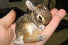 Animals are so cute !!