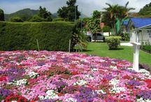 """The Flower Festival - Feria / Every year in January the """"Flower Festival"""" attracts people from all over the world and Panama. One of Boquete's biggest events! www.casademontana.com"""