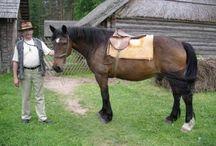 Horse - Аборигенские лошадки
