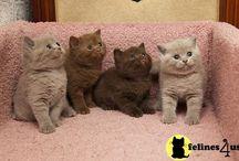 Kitty cats / I love cats, I am a crazy cat lady