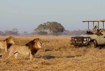 Livingstone Lodges & Hotels Accommodation