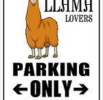 Llams / Im obsessed with LLAMAS