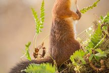 scoiattoli che