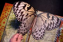 Butterflies / Anything on butterflies and crafts