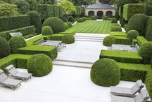 Boxwood Hedging