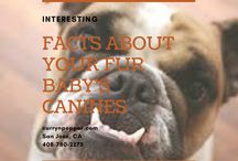 Curry 'n' Pepper Facts About Your Fur Baby's Canines / 0