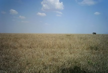 My Serengetis