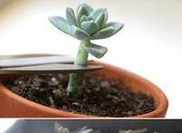 plantas y suculentas