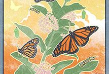 Monarch Migration & More! / Everything about Monarchs from migratory maps, to photos of their life cycle.  We need to help these beautiful butterflies as their numbers lower by planting milk week!