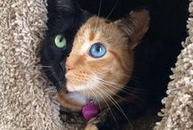 Unusual Colors in Cats