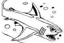 Coloriages de poissons et animaux marins / Découvrez le monde marin et toute sa population grâces à ces dessins représentant poissons, grenouille ou requin et autres...