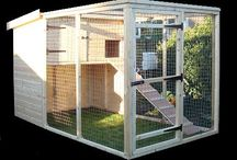 Cat kennels