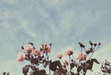 virágüzlet