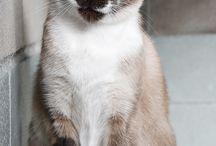 Gats en adopció / Gats en adopció en el CAAD MARESME