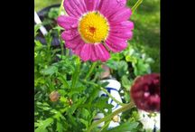 garden and gadgets , flowers and fix / garden  and garden- deco ,,flowers,trees,herbs,vegetables...