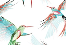 Recherche colibri / Logotype