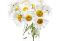 Floral Arrrangements / Floral gifts, decor and accessories for inspiration in books
