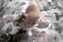 miy cat