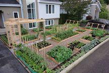 Ogrody warzywne