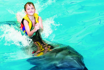 Dolphin Show / Dubai Dolphinarium is the premier such facility in the entire region, providing world class entertainment for the entire family.