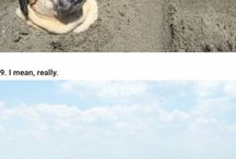 pugs and pets
